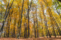 Bosque del otoño en la puesta del sol imágenes de archivo libres de regalías