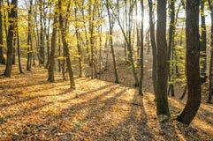 Bosque del otoño en la puesta del sol foto de archivo libre de regalías