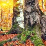 Bosque del otoño en las montañas Fotografía de archivo libre de regalías