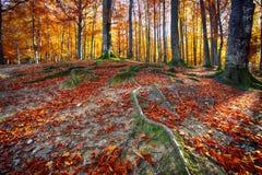 Bosque del otoño en las montañas Foto de archivo libre de regalías