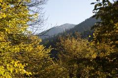 Bosque del otoño en montañas Fotografía de archivo