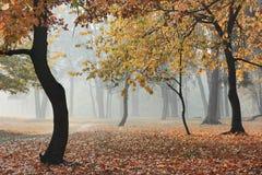 Bosque del otoño en niebla Foto de archivo libre de regalías
