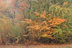 Bosque del otoño en niebla Fotografía de archivo