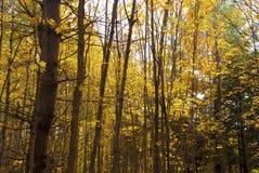 Bosque del otoño en Nueva Inglaterra foto de archivo libre de regalías