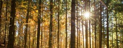 Bosque del otoño en soleado imágenes de archivo libres de regalías