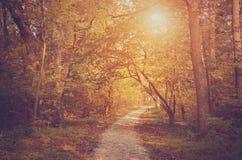 Bosque del otoño en un día soleado Imagenes de archivo