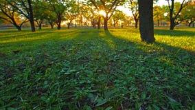 Bosque del otoño. 4K. HD LLENO, 4096x2304. almacen de metraje de vídeo