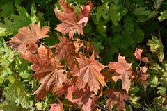 Bosque del otoño del bosque del otoño los colores de los árboles del otoño Foto de archivo