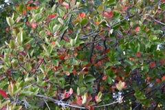 Bosque del otoño los colores de los árboles del otoño Fotos de archivo