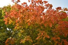 Bosque del otoño del bosque del otoño los colores de los árboles del otoño Imagen de archivo libre de regalías