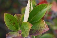 Bosque del otoño los colores de los árboles del otoño Fotografía de archivo libre de regalías