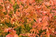 Bosque del otoño del bosque del otoño los colores de los árboles del otoño Imagenes de archivo