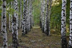 Bosque del otoño los colores de los árboles del otoño Imagenes de archivo