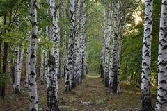 Bosque del otoño los colores de los árboles del otoño Fotos de archivo libres de regalías