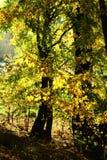 Bosque del otoño, madera del otoño Fotos de archivo libres de regalías