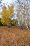 Bosque del otoño, madera del otoño Foto de archivo
