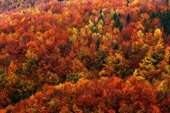 Bosque del otoño, muchos árboles en las colinas anaranjadas, roble anaranjado, abedul amarillo, picea verde, parque nacional bohe Imagenes de archivo