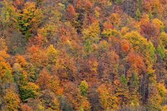 Bosque del otoño, muchos árboles en las colinas, roble anaranjado, abedul amarillo, picea verde, parque nacional bohemio de Suiza foto de archivo