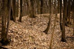 Bosque del otoño, punteado con las hojas caidas secas Imagenes de archivo