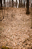 Bosque del otoño, punteado con las hojas caidas secas Fotografía de archivo