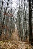 Bosque del otoño sin la gente foto de archivo