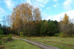 Bosque del otoño y el camino Foto de archivo libre de regalías