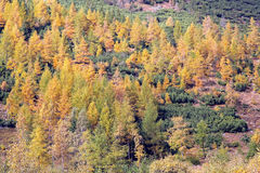 Bosque del otoño en el dolina de Ziarska - valle en alto Tatras, Slovaki Foto de archivo