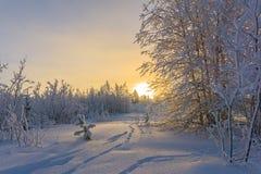Bosque del paisaje del invierno Foto de archivo libre de regalías