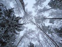 Bosque del paisaje del invierno en helada de la nieve Imagen de archivo libre de regalías
