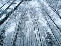 Bosque del paisaje del invierno en helada de la nieve Fotografía de archivo libre de regalías