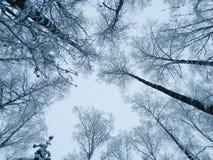 Bosque del paisaje del invierno en helada de la nieve Foto de archivo