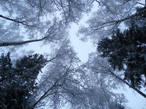 Bosque del paisaje del invierno en helada de la nieve Fotos de archivo libres de regalías