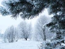Bosque del paisaje del invierno en helada de la nieve Imágenes de archivo libres de regalías