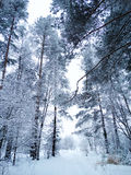 Bosque del paisaje del invierno en helada de la nieve Imagen de archivo