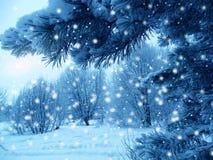 Bosque del paisaje del invierno en helada de la nieve Fotografía de archivo