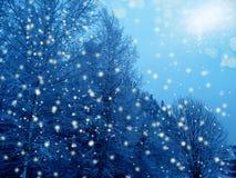 Bosque del paisaje del invierno en helada de la nieve Fotos de archivo