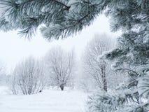 Bosque del paisaje del invierno en helada de la nieve Foto de archivo libre de regalías