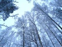 Bosque del paisaje del invierno en helada de la nieve Imagenes de archivo