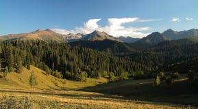 Bosque del paisaje en montañas Imagen de archivo libre de regalías