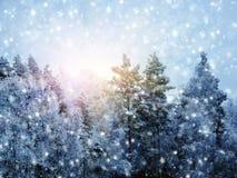 Bosque del paisaje del invierno en helada de la nieve con los haces luminosos soleados Fotografía de archivo libre de regalías