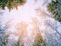 Bosque del paisaje del invierno en helada de la nieve con los haces luminosos soleados Foto de archivo libre de regalías