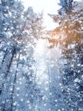 Bosque del paisaje del invierno en helada de la nieve con los haces luminosos soleados Fotografía de archivo