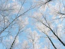 Bosque del paisaje del invierno en helada de la nieve con los haces luminosos soleados Imágenes de archivo libres de regalías