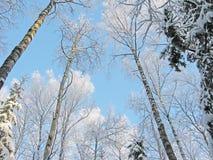 Bosque del paisaje del invierno en helada de la nieve con los haces luminosos soleados Imagenes de archivo