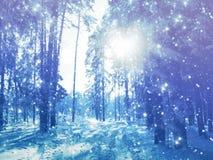 Bosque del paisaje del invierno en helada de la nieve con los haces luminosos soleados Fotos de archivo libres de regalías