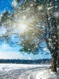 Bosque del paisaje del invierno en helada de la nieve con los haces luminosos soleados Imagen de archivo libre de regalías