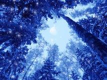 Bosque del paisaje del invierno en helada de la nieve con la luna Fotografía de archivo libre de regalías