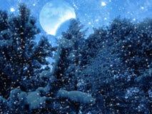 Bosque del paisaje del invierno en helada de la nieve con la luna y las estrellas Imagen de archivo