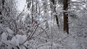 Bosque del paisaje Nevado almacen de video
