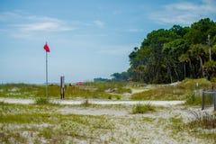 Bosque del Palmetto en la playa de la isla de la caza Imágenes de archivo libres de regalías